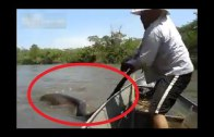 Un brésilien trouve un serpent géant et le pourchasse