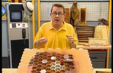 Le déclin des abeilles expliqué