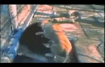 Les meilleurs combats d'animaux