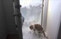 Ce chat incroyable déblaye la neige