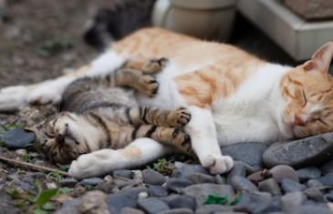 Au Japon on a trouvé l'Ile des Chats