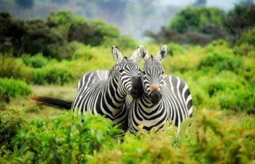 Premier séjour au Kenya : 3 attraits d'exception qui méritent le détour