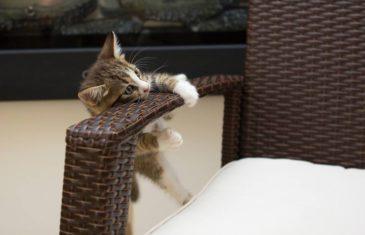 Prévention et santé du chat : ce qu'il faut prévoir